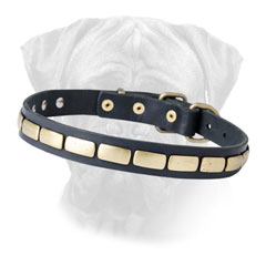 Leather dog collar with firm hardware
