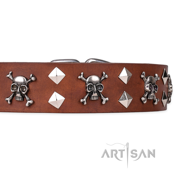 Everyday leather dog collar with incredible embellishments
