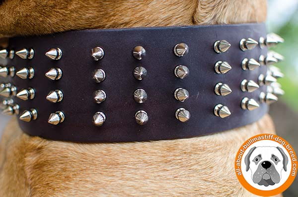 Awesome Bullmastiff leather collar with fancy decoration