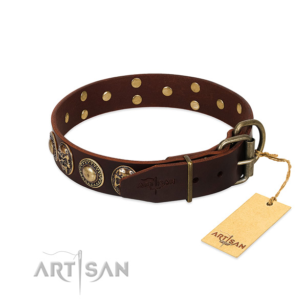 Durable studs on everyday walking dog collar