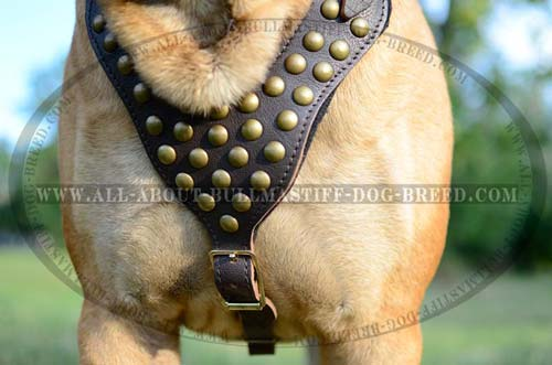 Best Leather Bullmastiff Harness with Easy Adjustable Straps
