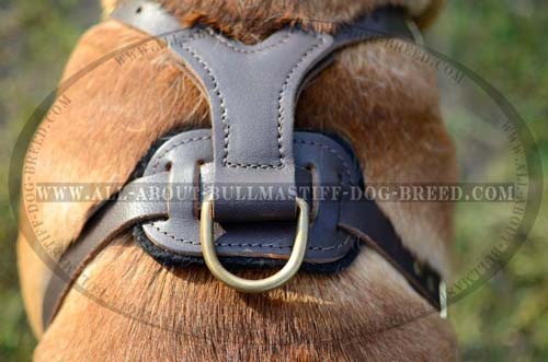 Excellent Quality Bullmastiff Harness for Many Years' Usage