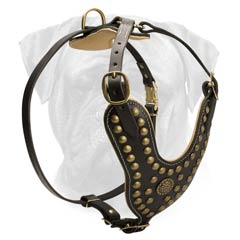 Gorgeous Training Harness for Bullmastiffs