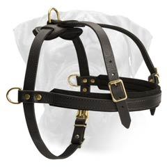 Choose the Best Leather Dog Harness