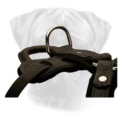 Training Leather Harness for Bullmastiffs with Strong D-ring for Leash Hook Up
