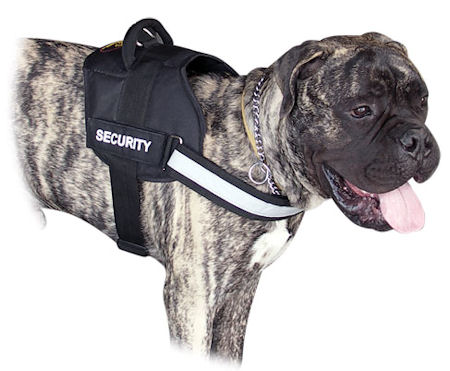All Weather Durable Nylon Bullmastiff Harness with Reflective Strap