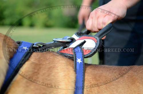 Easy Grab Handle on Hand Painted Leather Dog Harness