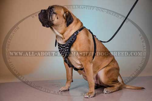 Dog Harness for Bullmastiff