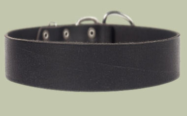 2 inch wide All Weather Collar for Bullmastiff-Leather Collar
