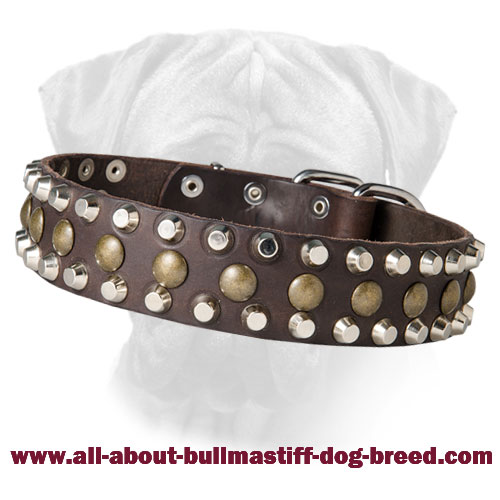 Leather Вullmastiff Collar with Pyramids and Studs Bump and Bits
