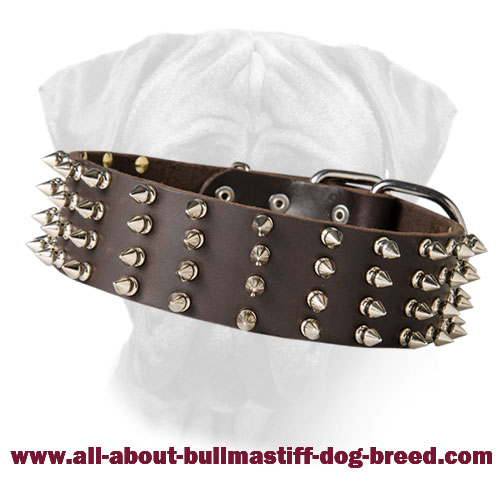 Wide Leather Spiked Bullmastiff Collar Top Paw Style