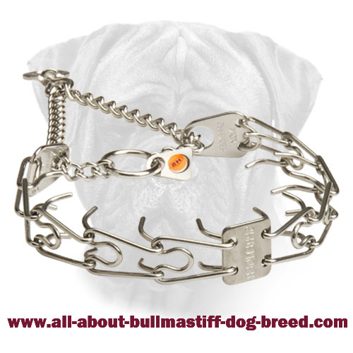 Bullmastiff Pinch Collar Made of Stainless Steel