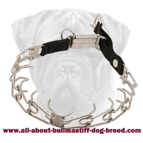 Bullmastiff Pinch Collar Stainless Steel with Click Lock Buckle and Nylon Loop