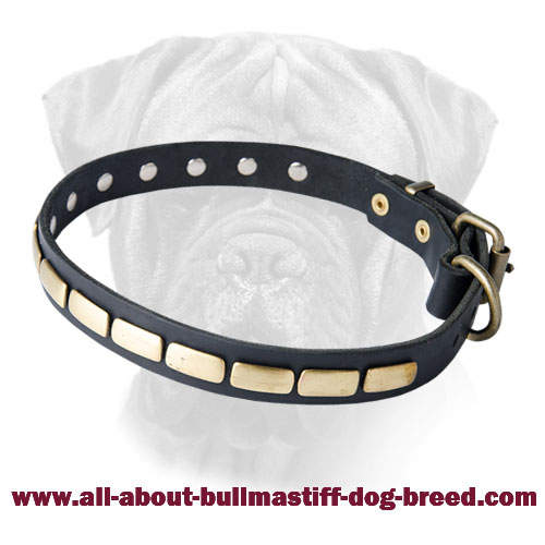 Leather Special Dog Collar With Plates for Bullmastiff Breed