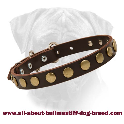 Special Bullmastiff Dog Leather Collar With Brass Circles