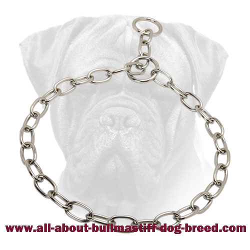 Chrome Plated Choke Collar for Bullmastiff Training