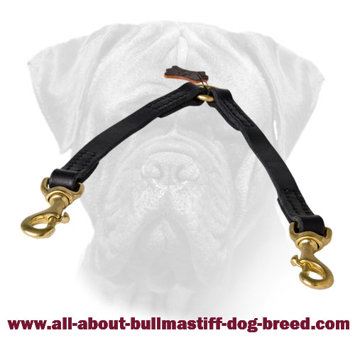 Easy Walking of 2 Bullmastiffs with Leather Coupler