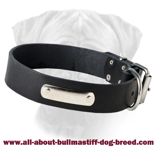 Leather Bulmastiff Collar with Nickel Plated Name Plate