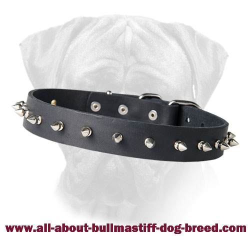 Dog Collar with Shining Nickel Spikes for Bullmastiff