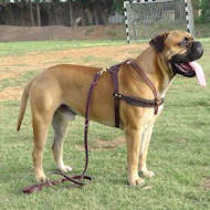tracking pulling bullmastiff  leather dog harness-large dog harness